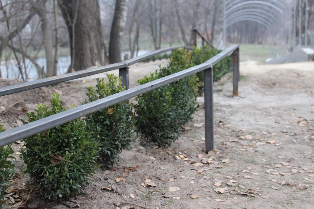 У Фастові буде «Зелений тунель» -  - 73404015 2474892909295466 8557077787242921984 o