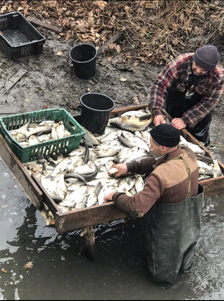 75264827_2539167386159771_2158817796111204352_o Будемо з рибою: у водойми Білоцерківщини та Володарщини випустили понад 6 тонн риби