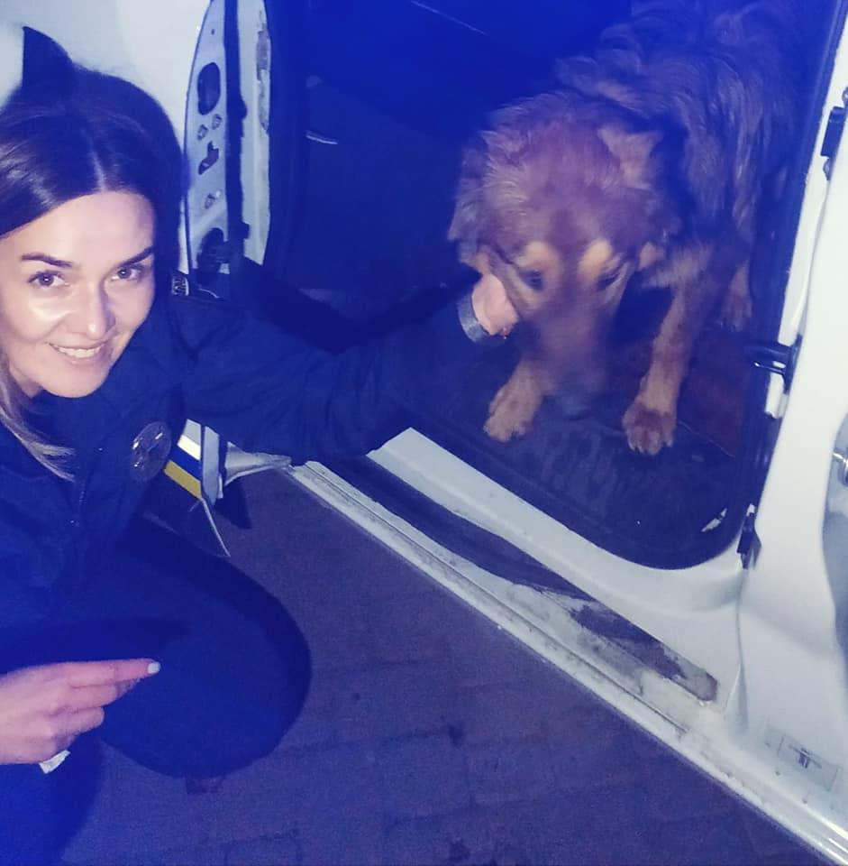 77425157_795980107506572_7499418695916060672_n Патрульна з Василькова приїхала на незвичайний виклик і… врятувала пса