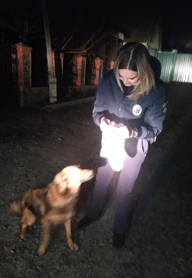 78722194_795980150839901_2560761614722662400_n Патрульна з Василькова приїхала на незвичайний виклик і… врятувала пса