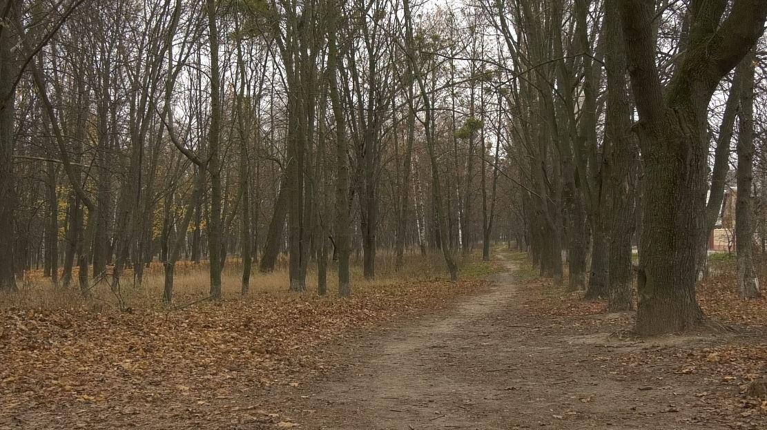Boyarka-park На захист парку: в Боярці влада планує пустити під висотну забудову частину зеленої зони