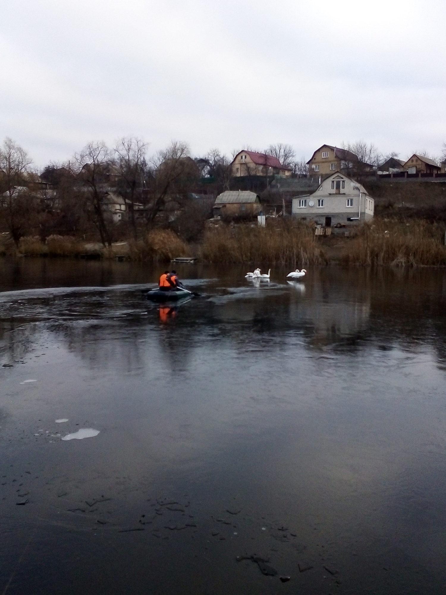 IMG_20191124_093720-1500x2000 У Кагарлицькому районі рятувальники визволили 15 лебедів з крижаної пастки