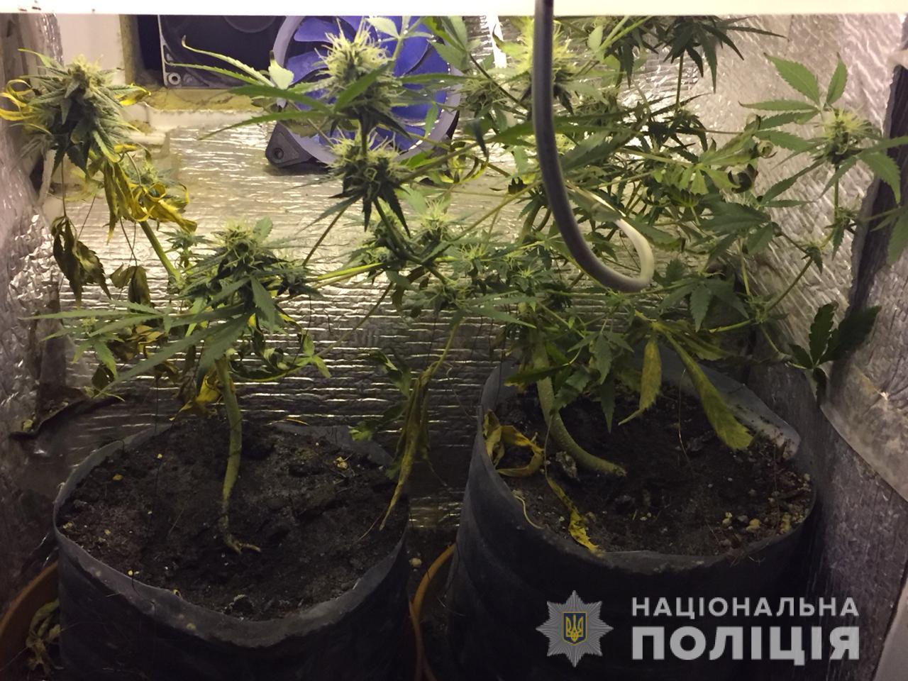 Irp-2-rozb-nap-3 В Ірпені наркоман вчинив два озброєні напади на жінок протягом години