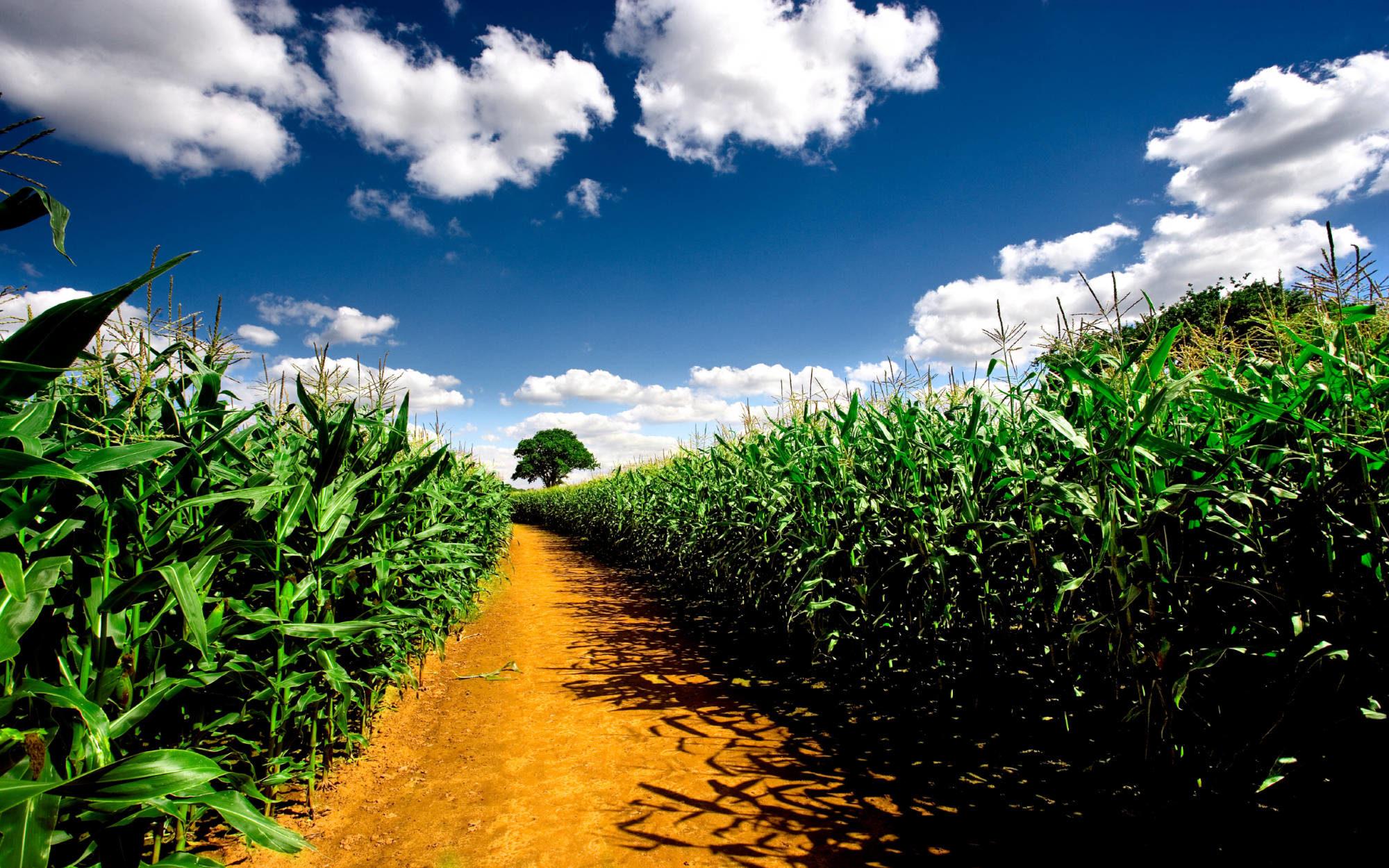 Світовий банк підтримав плани українського уряду відкрити ринок землі -  - clouds corn farms fields nature wallpaper 500 2000x1250 2000x1250
