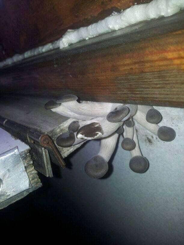 """gryby-1 У поїзді """"Укрзалізниця"""" ростуть гриби"""