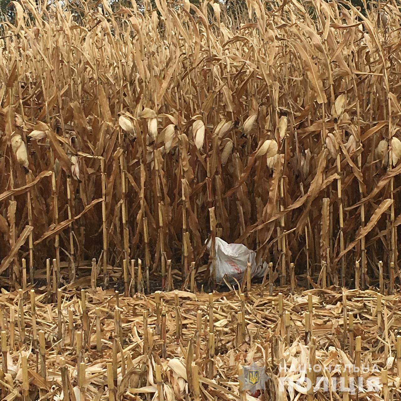 На Миронівщині затримано крадіїв кукурудзи -  - kukur2