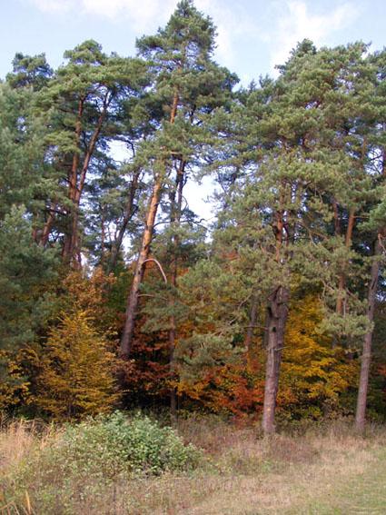 roztocca8 На Обухівщині держава відвоювала 1 гектар лісу