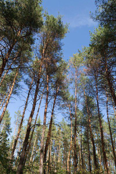 samarsky-les.novomockovckv2.jpg.dbc03f2f287ff34d3a09bbc16a63af33 На Обухівщині держава відвоювала 1 гектар лісу