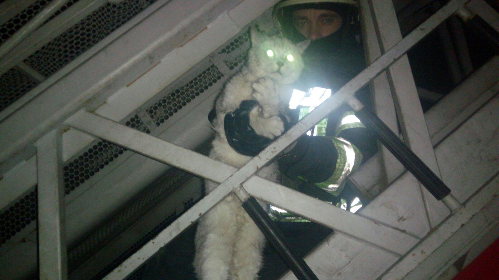 У Софіївській Борщагівці пожежники врятували кота -  - yzobrazhenye viber 2019 11 17 21 13 33