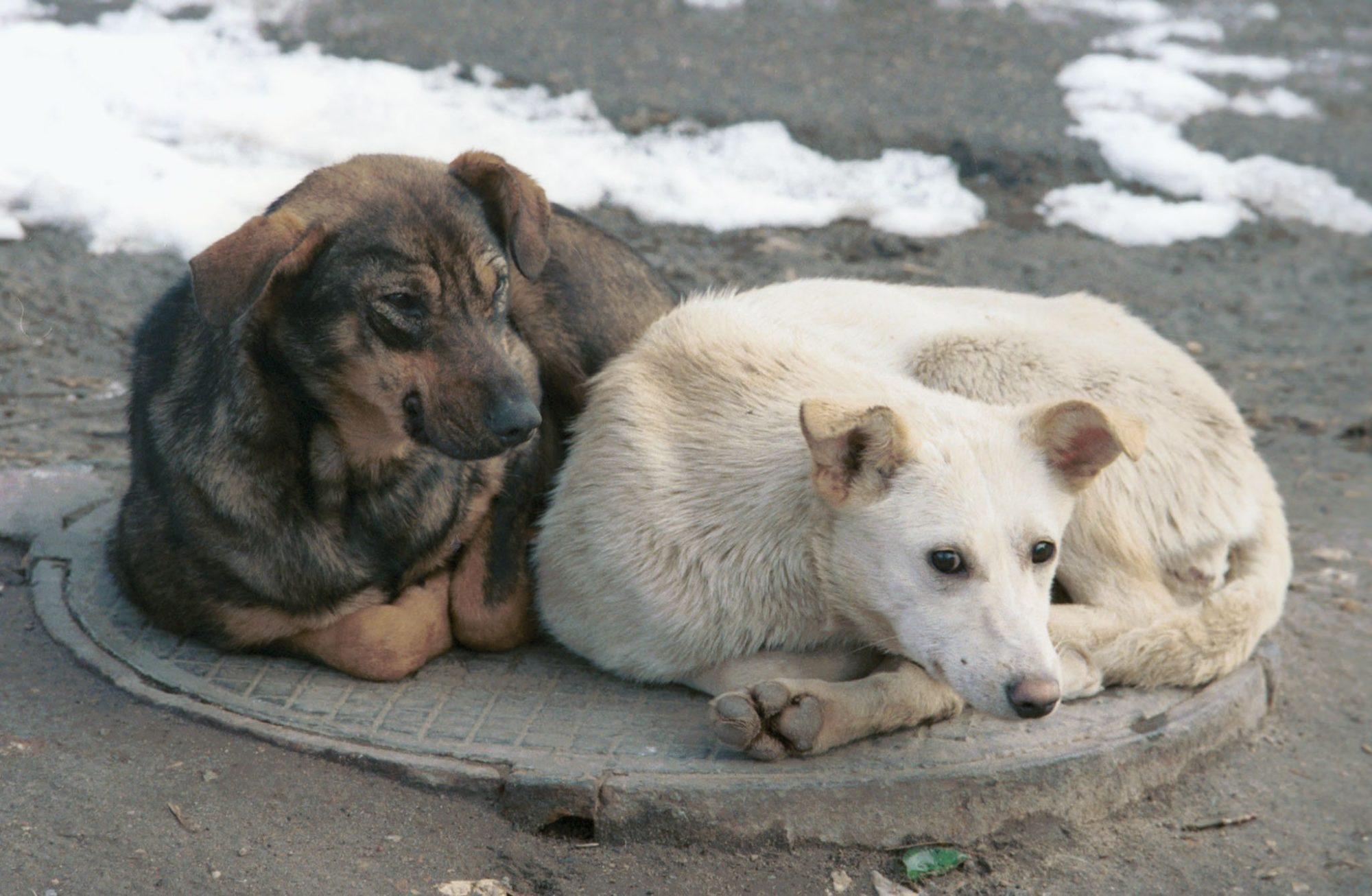03_bezdomnye-2000x1306 Вони хочуть пережити цю зиму: з першим снігом тварини опинилися під загрозою смерті