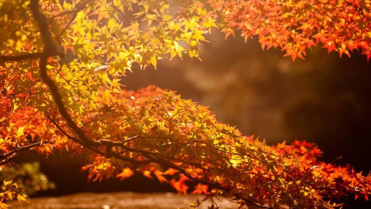 Раз на 139 років: осінь 2019 визнано однією з найтепліших у столиці - погода, осінь, клімат - 03 osen