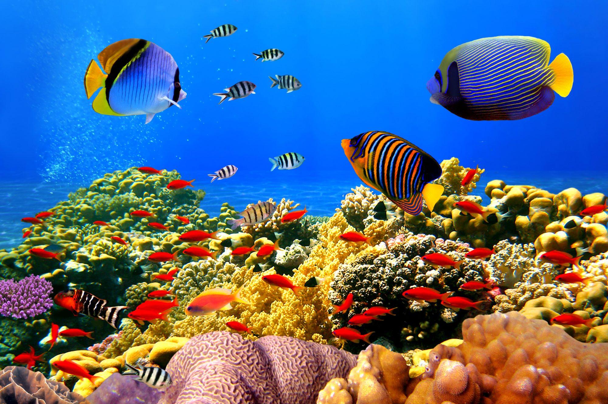 Підводна акустика: вчені навчилися воскрешати коралові рифи - океан, Австралія - 04 koral 2000x1328