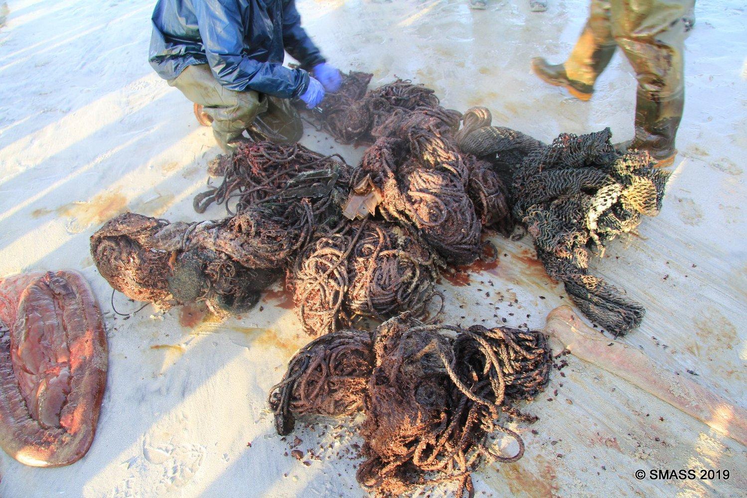 05_kashalot2 Жахливі наслідки забруднення океану: у шлунку кашалота знайшли 100 кг сміття (ФОТО 18+)