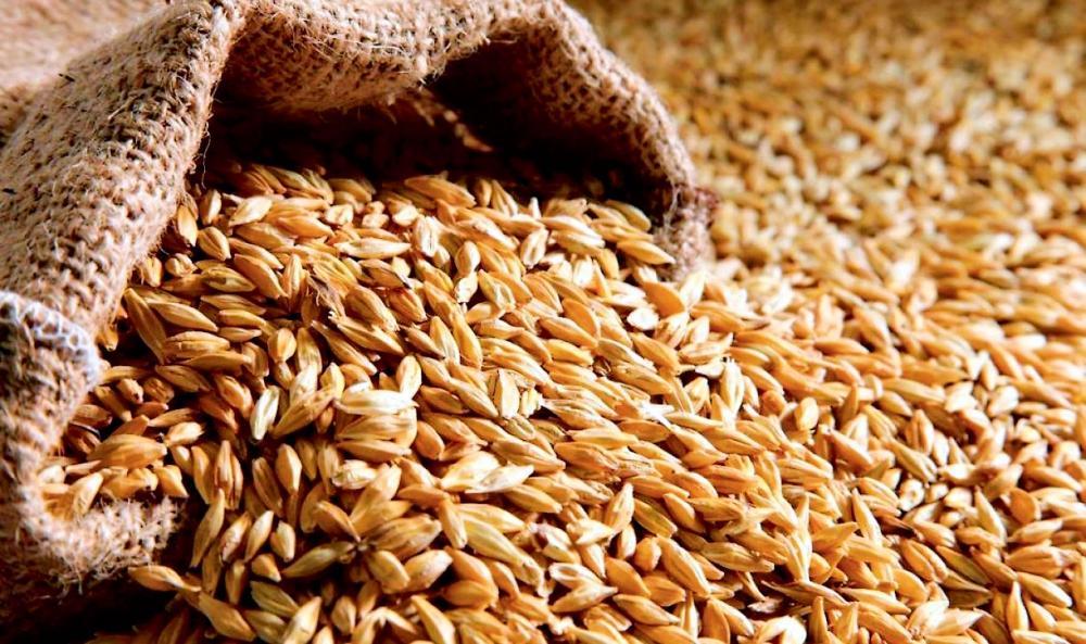 08_zerno Завдяки рекордному врожаю в Україні на світовому ринку впала вартість зернових