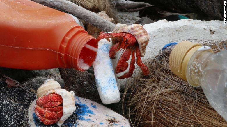 11_rak Нові жертви пластику: півмільйона раків-самітників загинули в Тихому та Індійському океанах