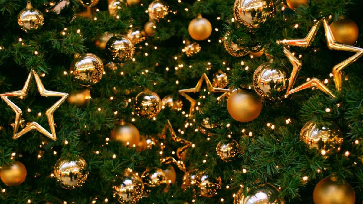 Новорічна ялинка у Вишгороді: жодне живе деревце не постраждає - новорічна ялинка, київщина, Вишгород - 1205 yalynka