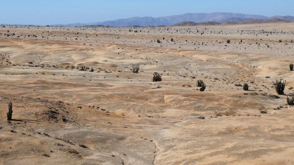Вчені знайшли у пустелі організми, яким не потрібна вода - рослини - 13 pustelya