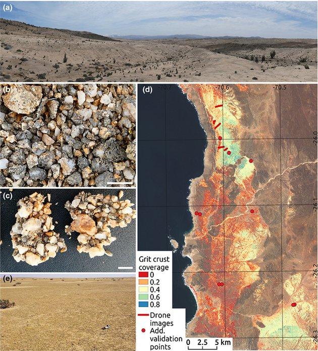 Вчені знайшли у пустелі організми, яким не потрібна вода - рослини - 13 pustelya3
