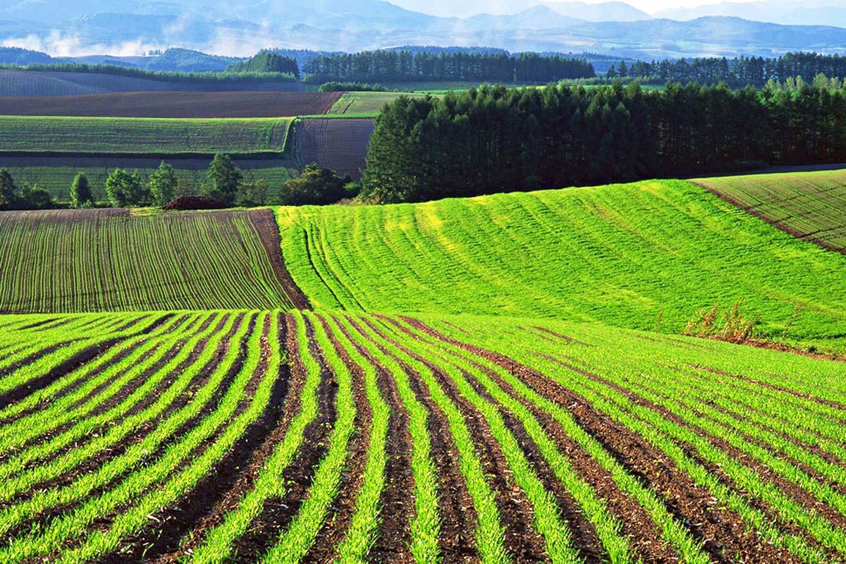 Тетіївська міськрада порушила вимоги земельного законодавства -  - 1447134293 agricultural land