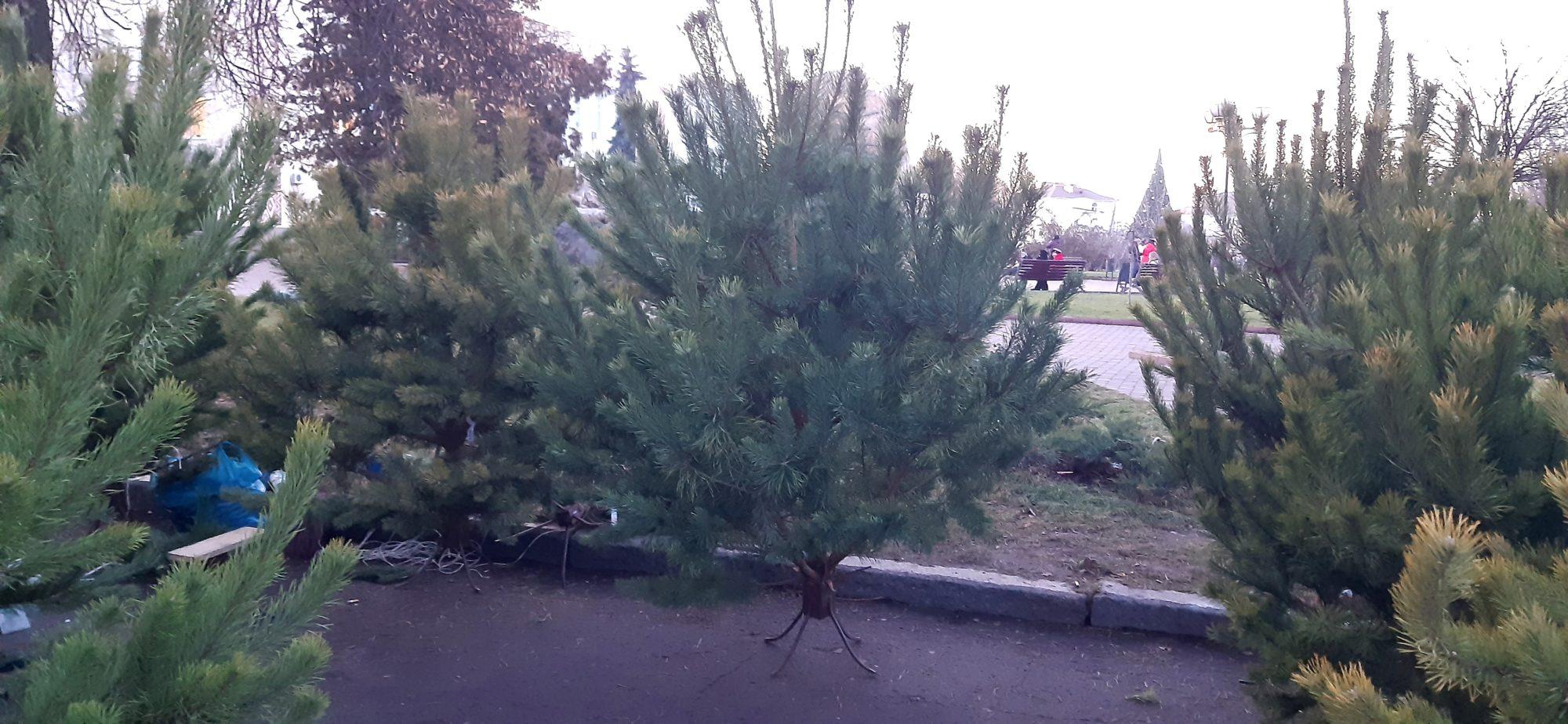 Ялинкова пора в Борисполі: що по чім -  - 20191219 155750 2000x924