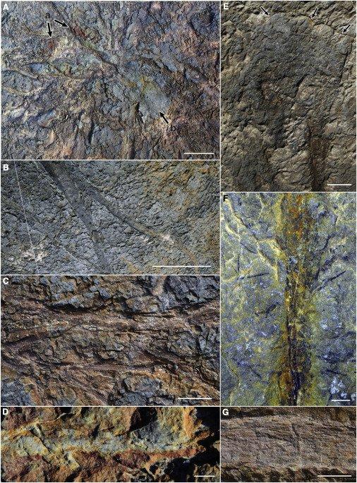 Вчені знайшли найдавніший ліс у світі (ФОТО) - ліс, вчені - 21 les2