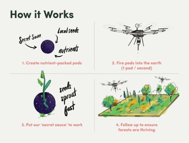 У Канаді висадять 1 000 000 000 дерев за допомогою дронів - Дерева - 23 kanada2