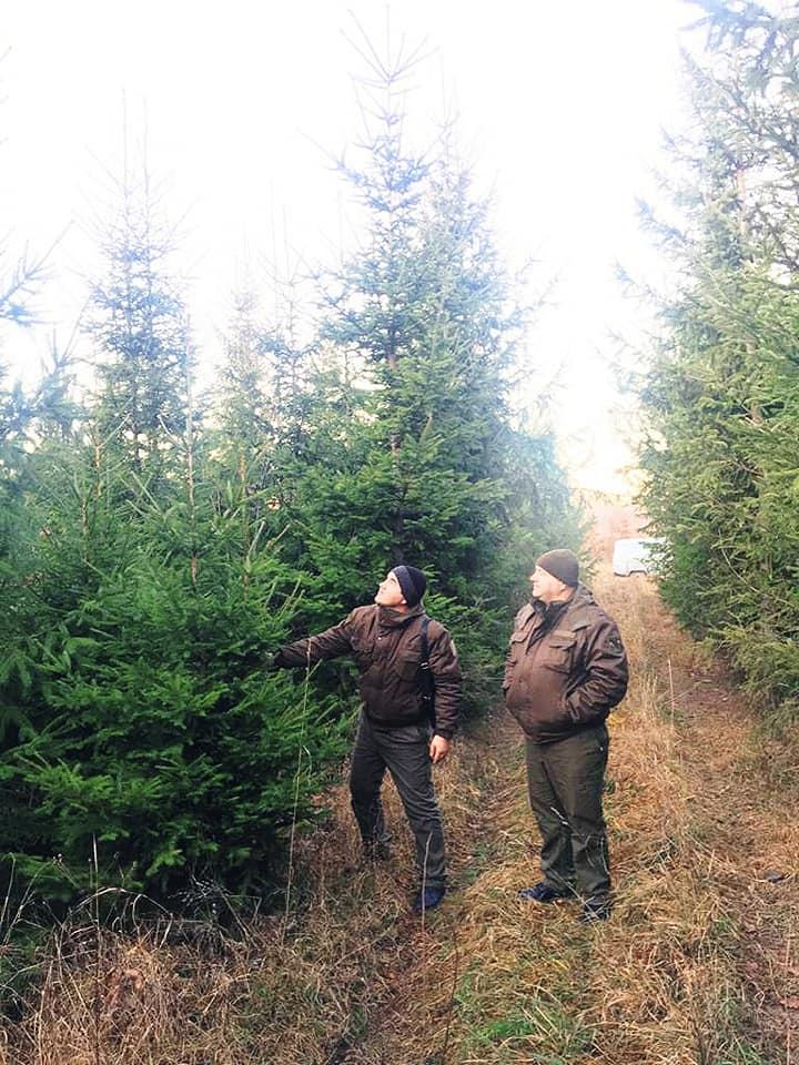 Незабаром у Фастові почнуть продавати новорічні ялинки - Фастівський лісгосп, Фастів, новорічні ялинки - 78179130 2154120174688279 917689474404581376 n