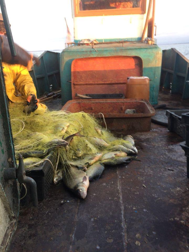 Ловися рибка: на Іванківщині виявлено порушення правил промислового рибальства -  - 78288650 2612314358845073 7966721200829235200 o