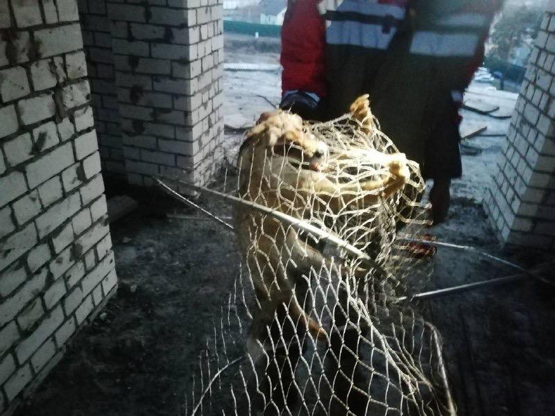 У Чайках на даху зловили лисицю - Дах - F449EA0A 62AE 443B A951 EC3B98A0DF57