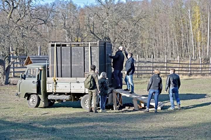 Київський зоопарк передав молодого зубра до Національного парку «Залісся» -  - FB IMG 1575195304530