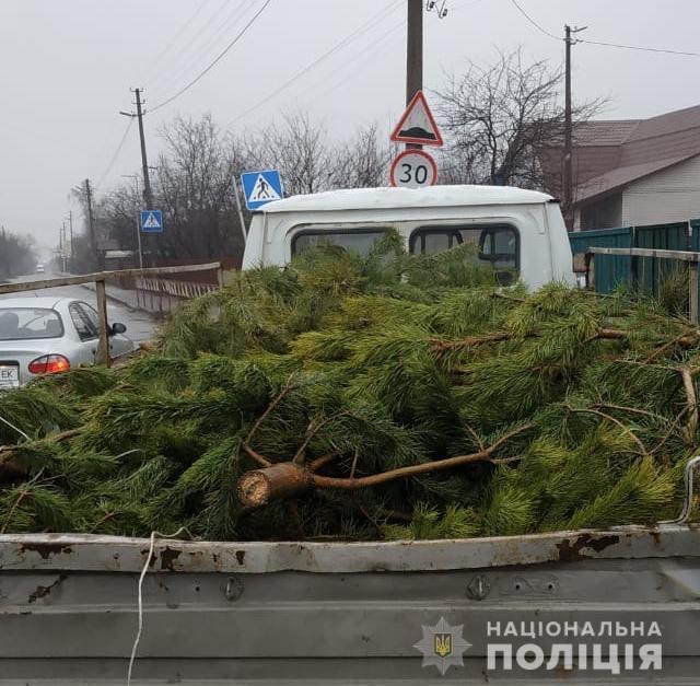На Київщині виявляють порушення продажу новорічних ялинок -  - WhatsApp Image 2019 12 25 at 14.50.14
