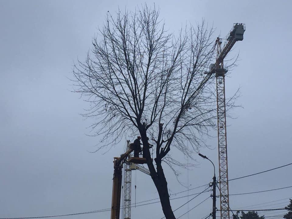 Трухлявий стовбур: у Гостомелі зрізали аварійне дерево - природа, Приірпіння, київщина, екологія, Гостомель - Zriz der Sob Turg do 1
