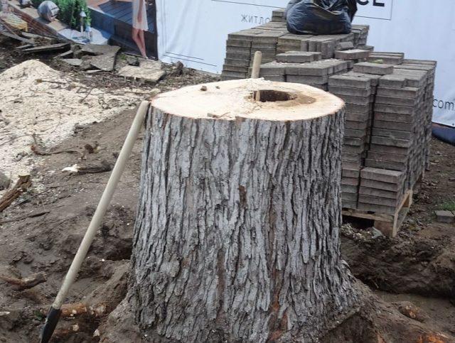 Трухлявий стовбур: у Гостомелі зрізали аварійне дерево - природа, Приірпіння, київщина, екологія, Гостомель - Zriz der Sob Turg pen 0 640x483