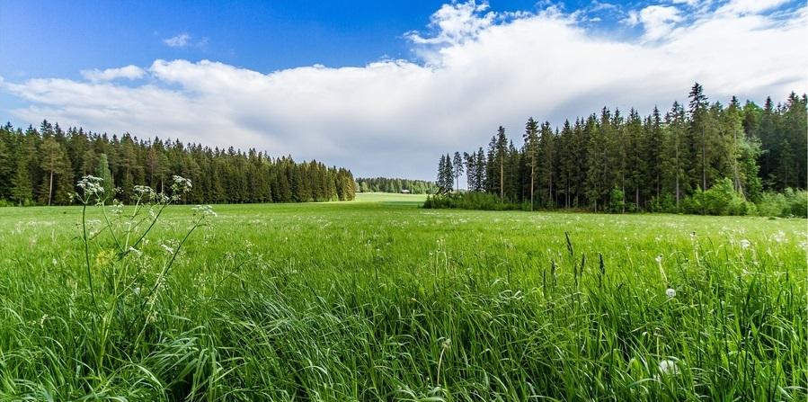 pole-lug У Таращанському районі попередили незаконне вибуття 40 га державної землі