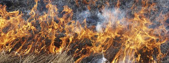 На Броварщині ліквідували загоряння торфовищ -  - trava1