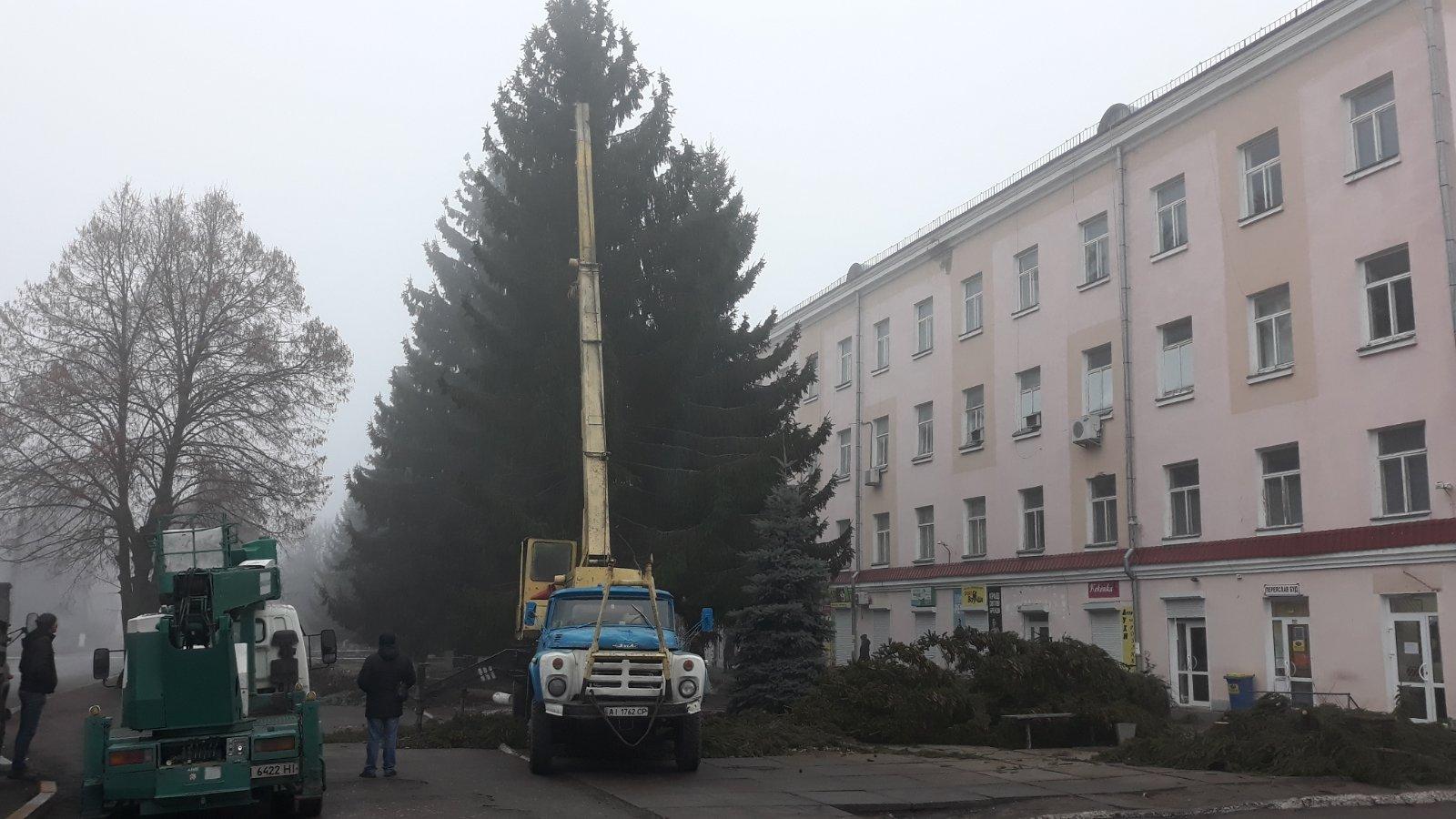 Переяславців обурила вирубка ялинок на приватній землі -  - yzobrazhenye viber 2019 12 12 10 21 16