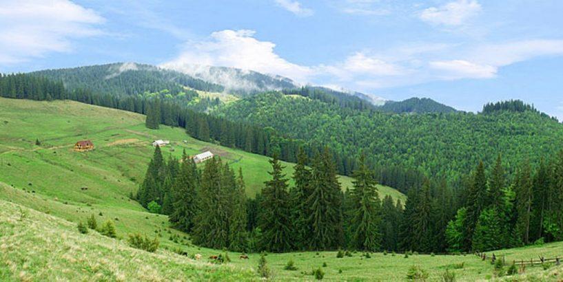 zemli Прокуратура вимагає повернення державі 5,5 га земель на Миронівщині