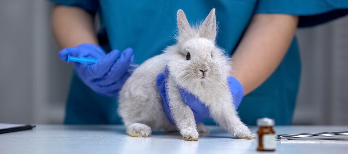 В Україні заборонять тестувати косметику на тваринах