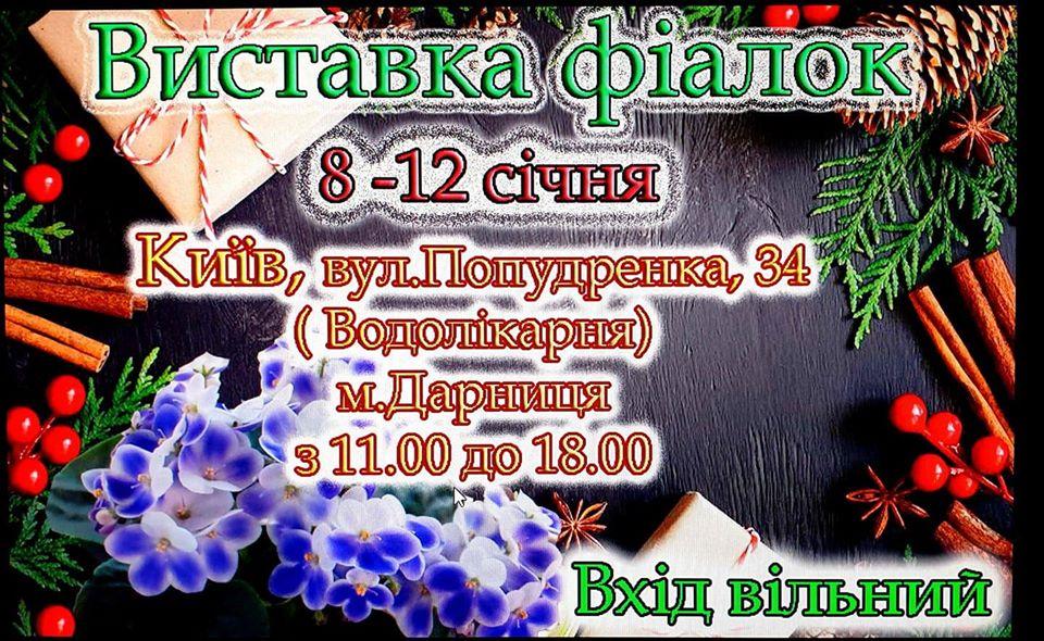 До кінця тижня в столиці триватиме виставка фіалок - квіти, виставка - 08 fyalka2