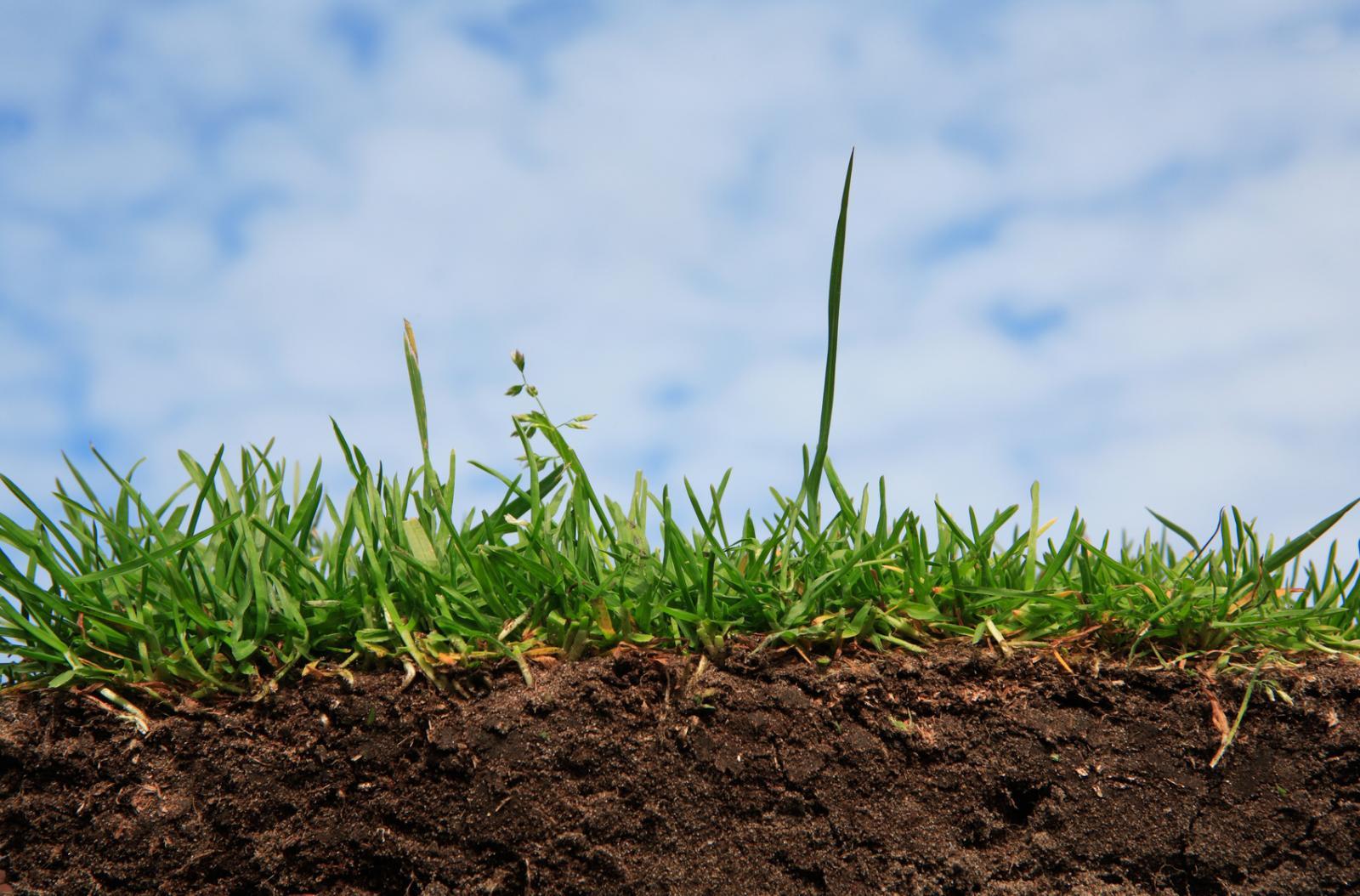 Український технолог по всьому світу відкриває еко-ферми з виробництва біогумусу - еко - 09 vermyferma