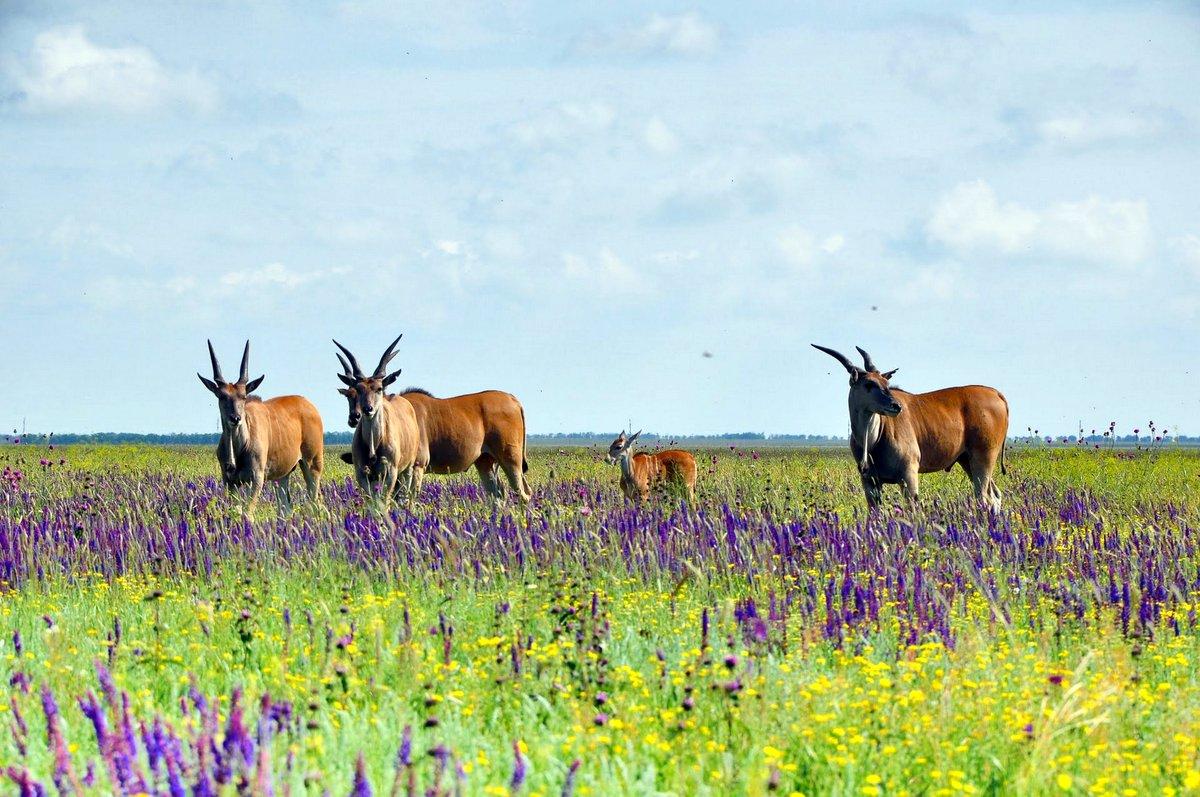 Сьогодні – Всесвітній день заповідників і національних парків - заповідник - 11 zapovednyk