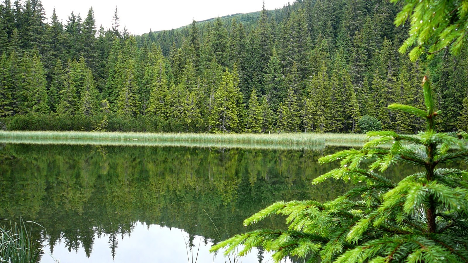 Сьогодні – Всесвітній день заповідників і національних парків - заповідник - 11 zapovednyk3