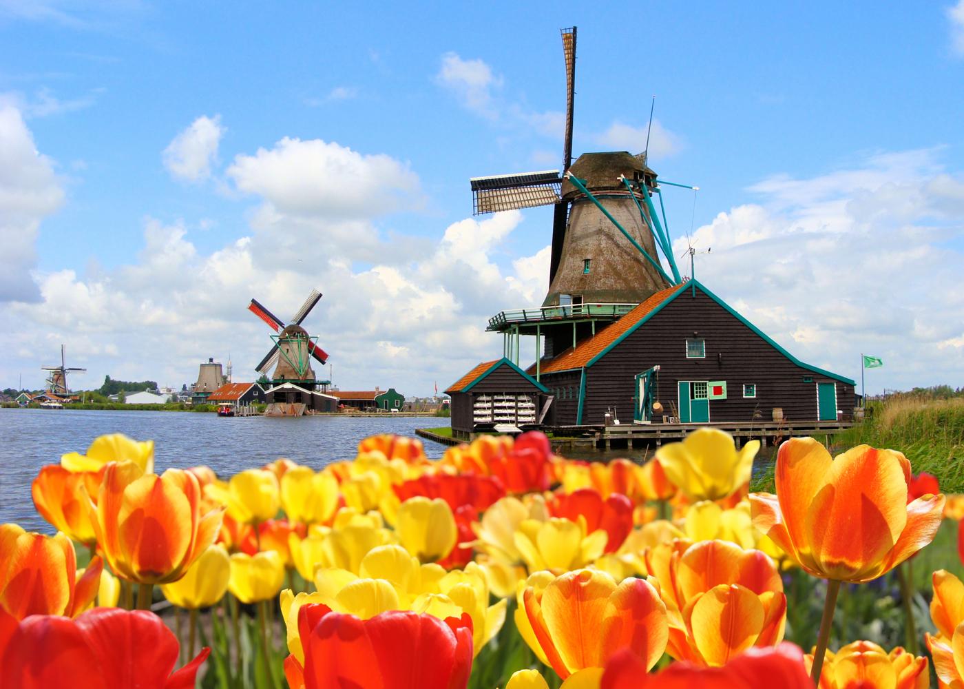 Відтепер Нідерланди: країна тюльпанів з 1 січня офіційно відмовилася від назви Голландія -  - 1461307457
