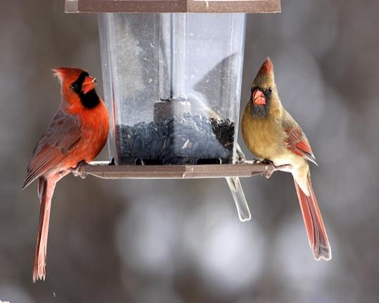 У світі триває великий зимовий облік птахів -  - 16da68d2
