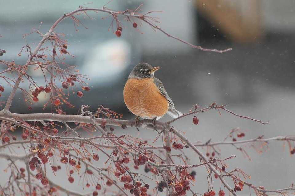 Без опадів, морозно, туман: погода на 17 січня на Київщині - погода - 17 pogoda3