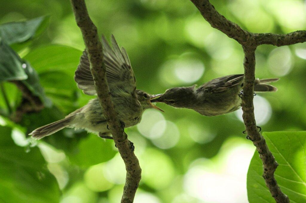 Куплений для порятунку співочого птаха острів заполонили туристи -  - 19 ostrov2