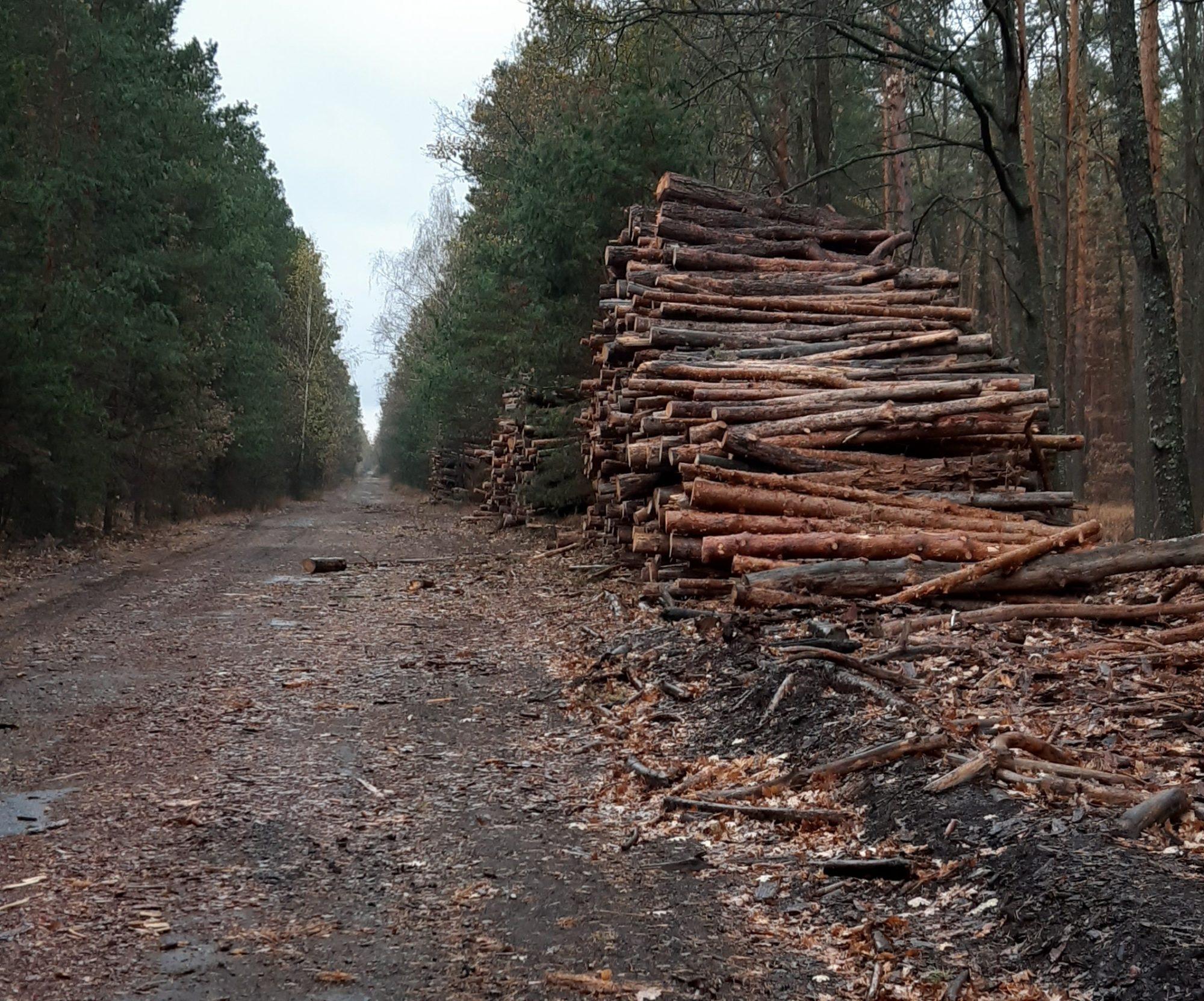 20191103_144108-2000x1663 Через незаконну вирубку лісу Україна зазнала 1 млрд грн збитків