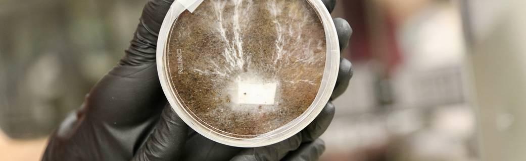 НАСА планує вирощувати бази на Марсі і Місяці із дивовижного метріалу: грибів - Місяць, Марс, Грибок, NASA - 20 grybok