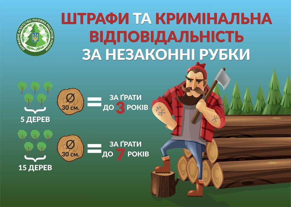 22_graty Тепер лісорубів-браконьєрів в Україні саджатимуть за ґрати
