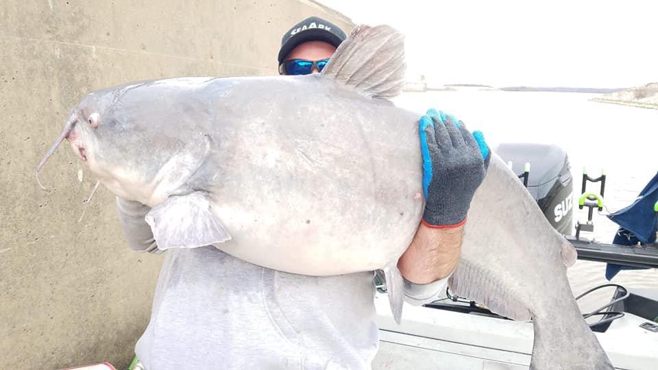 22_ryba Риба-гігант: в США спіймали білого амура рекордної довжини